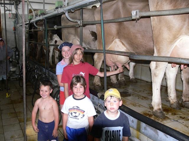 Kühe melken auf dem Ferienhof Rösch