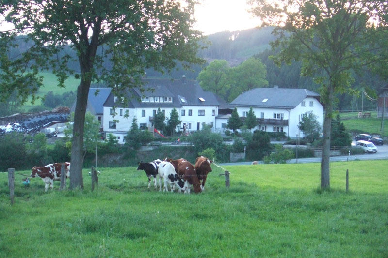 Kühe weiden vor dem Schellen Hof