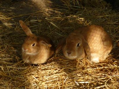 Kaninchen auf dem Ennenhof