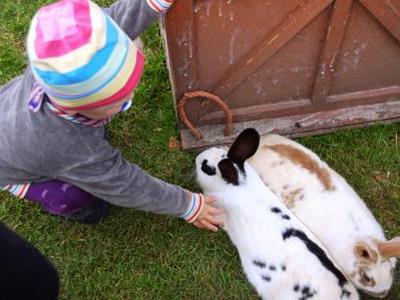 Kaninchen braun,weiss