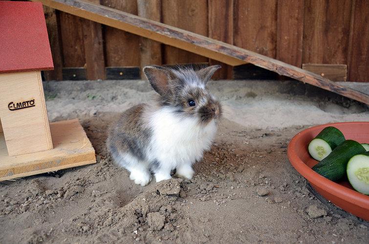 Kanninchen auf dem Salenberghof