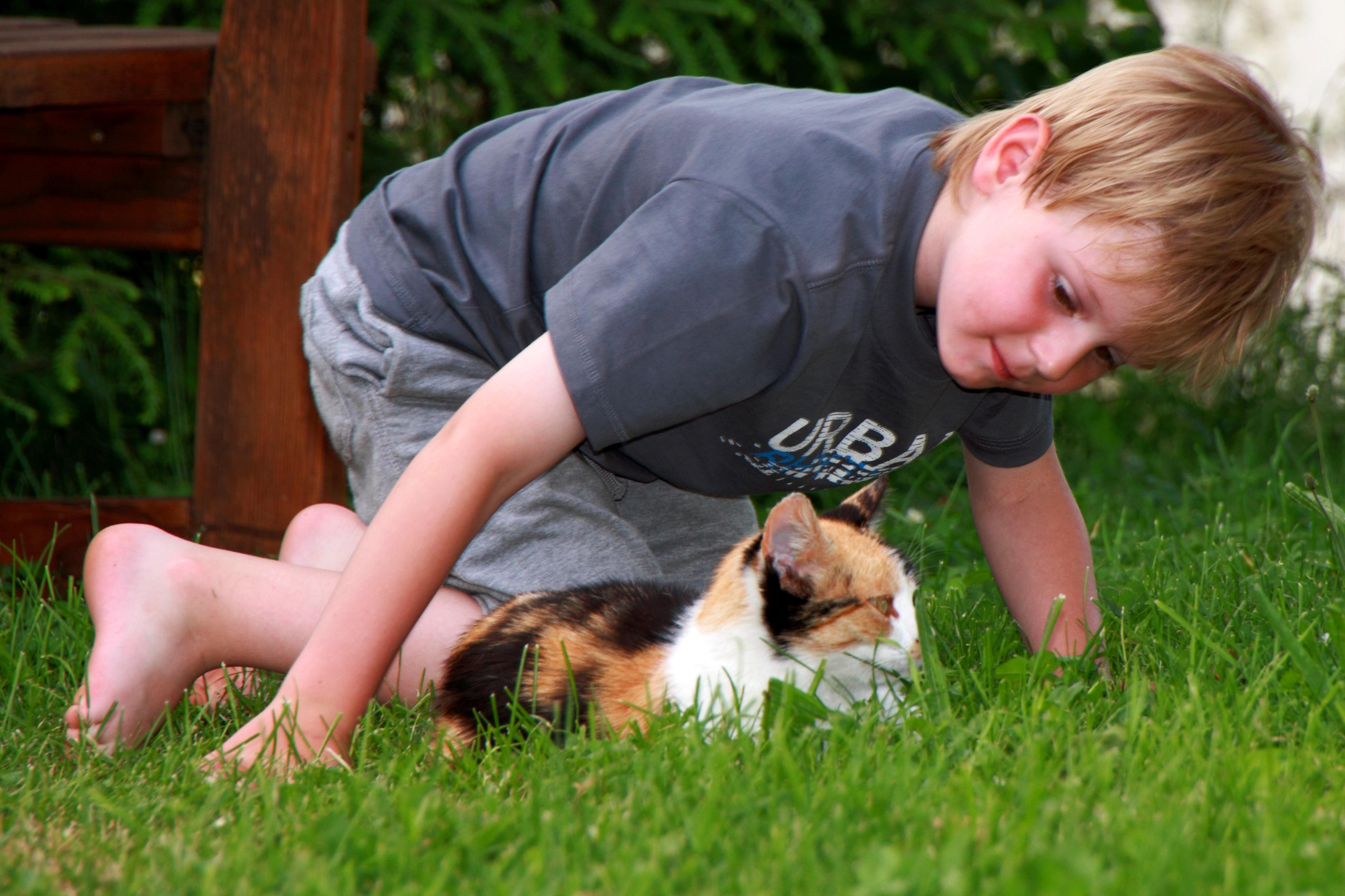 Katzen auf dem Ederhof