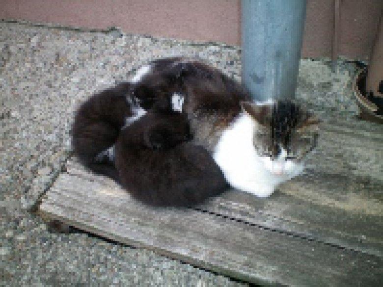Katzen auf dem Grub Daniel Hof