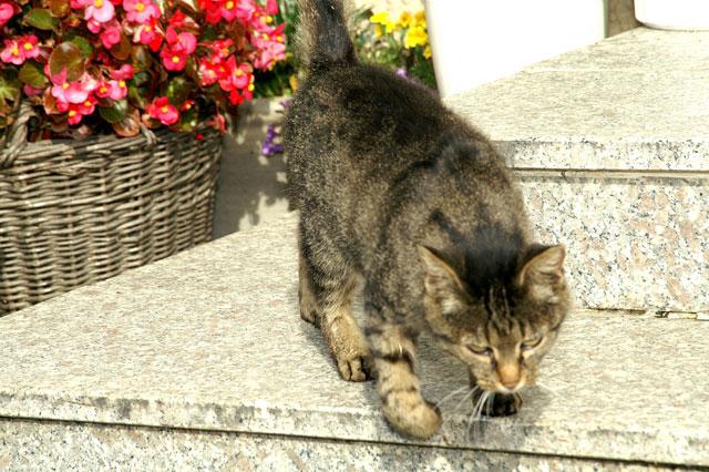 Katzen fühlen sich wohl auf dem Ferienhof Sauter