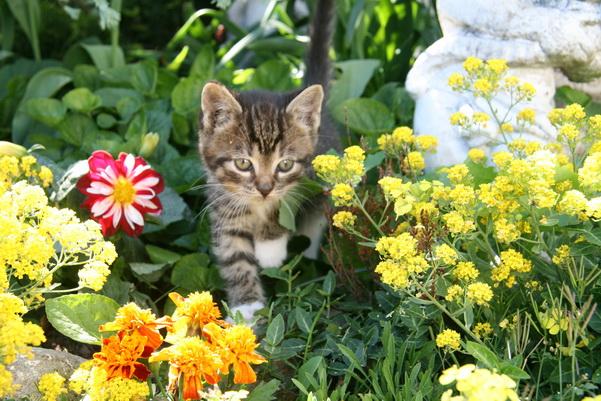 Katzen gibt es natürlich auch auf dem Erlebnis-Bauernhof Kliewe