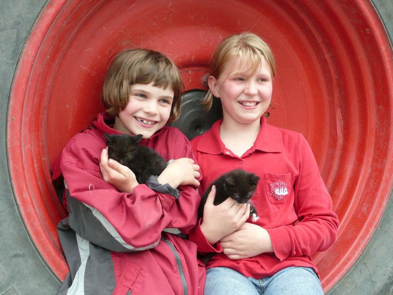 Katzen lieben Streicheleinheiten auf dem  Schellen Hof