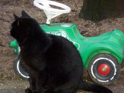 Katzen spielen gerne mit auf dem Poenenhof