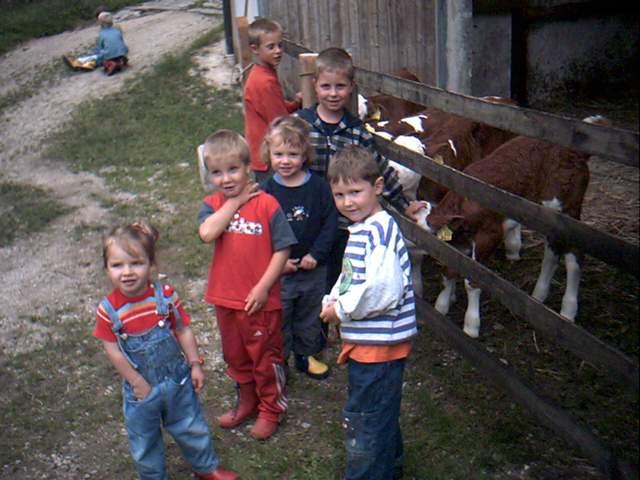 Kinder bei den Kälbern auf dem Familien-Ferienbauernhof Hacker