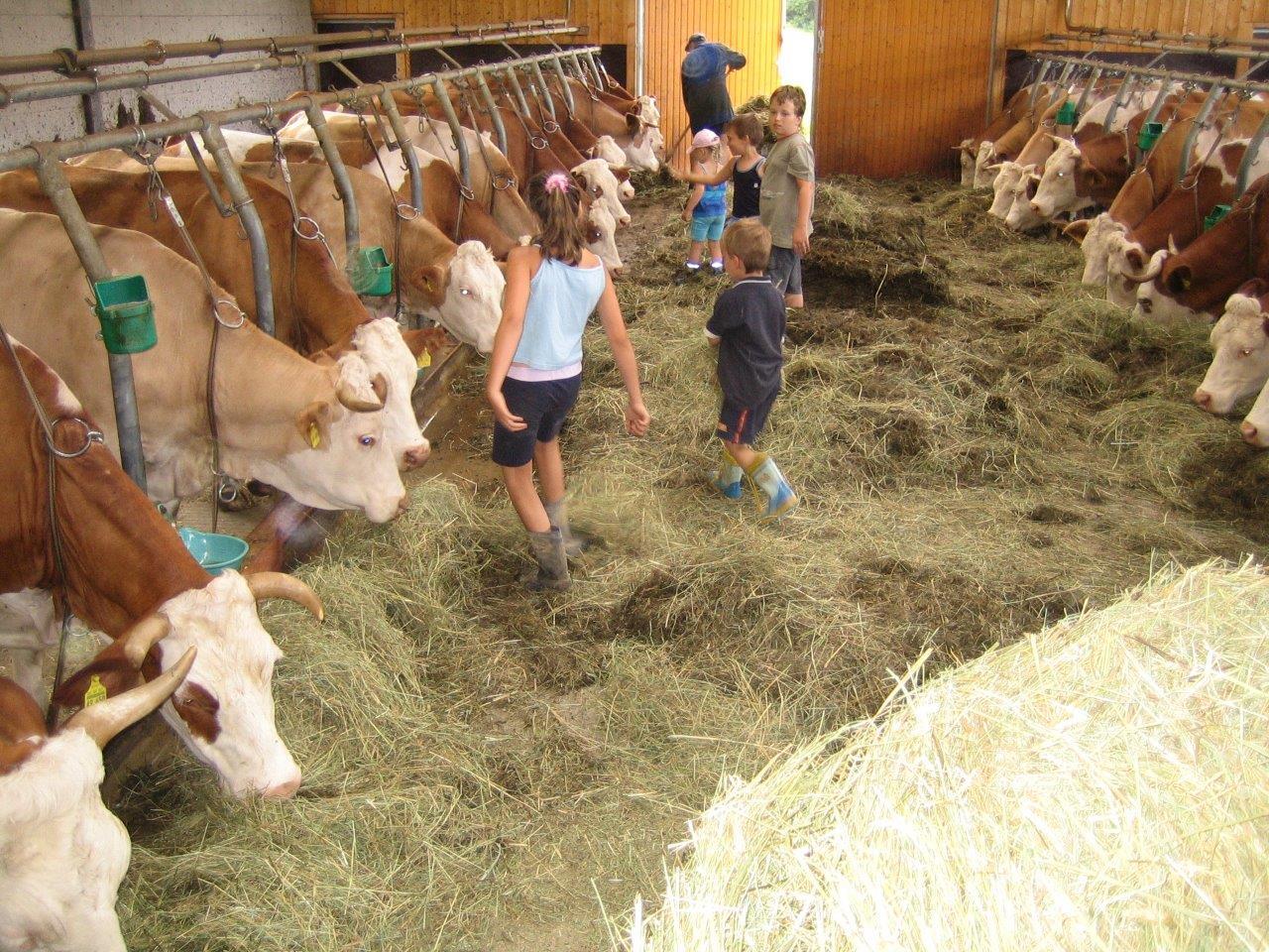 Kinder im Kuhstall auf dem Ranzinger Hof