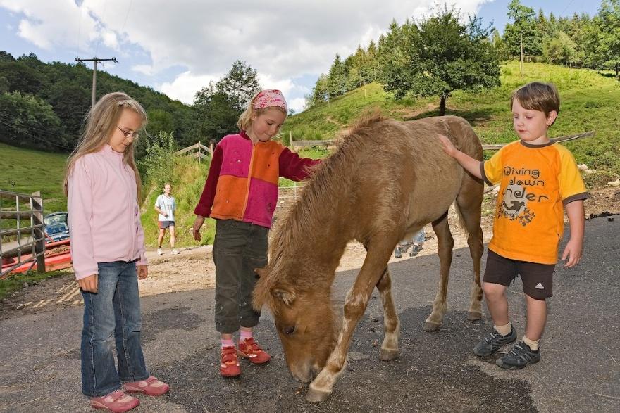 Kinder kümmern sich gerne um die Fohlen auf dem Schmidbauernhof