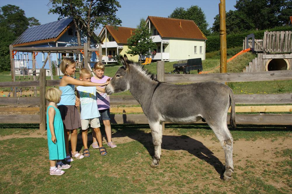 Kinderfreundlicher Esel im Feriendorf Nehmeier