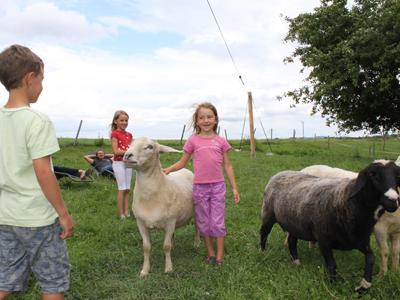 Kinderliebe Schafe  im Rupertiwinkel Berchtesgaden