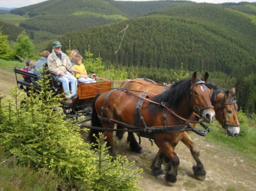 Kutsche fahren vom Schellen Hof aus