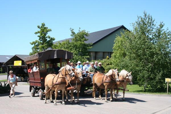 Kutschfahrt vom Erlebnis-Bauernhof Kliewe