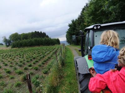 Mit dem Traktor mitfahren auf dem  Hof Stratmann