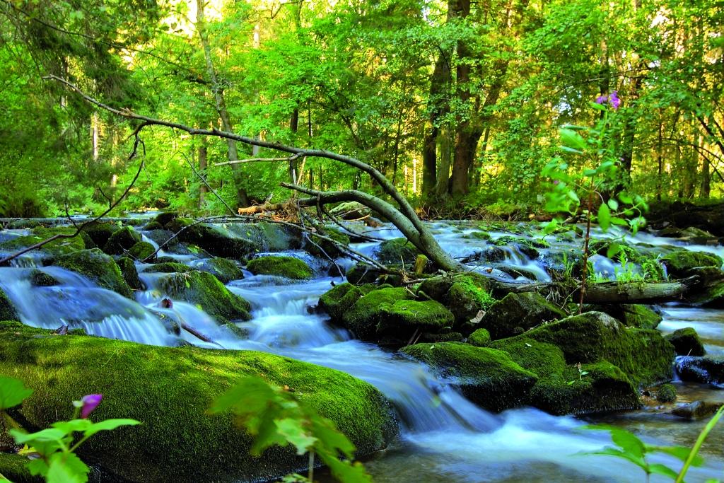 Natur erleben rund um das Landhaus Altweck