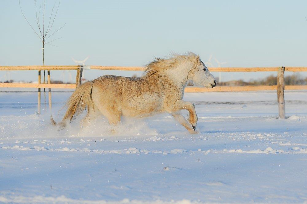 Natur mit Pferden erleben