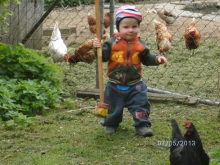 Nico auf Hühnerjagd
