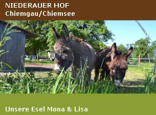 Unsere Esel Mona & Lisa