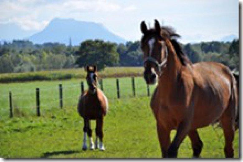 Pferde auf dem Springerhof auf der Weide