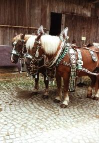 Pferdegespann auf dem Familien-Ferienbauernhof Hacker