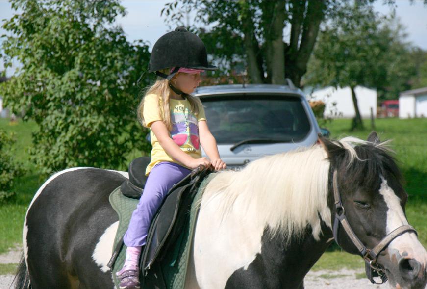 Pony Schecki