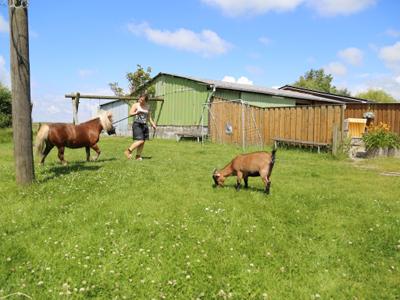 Pony ausführen