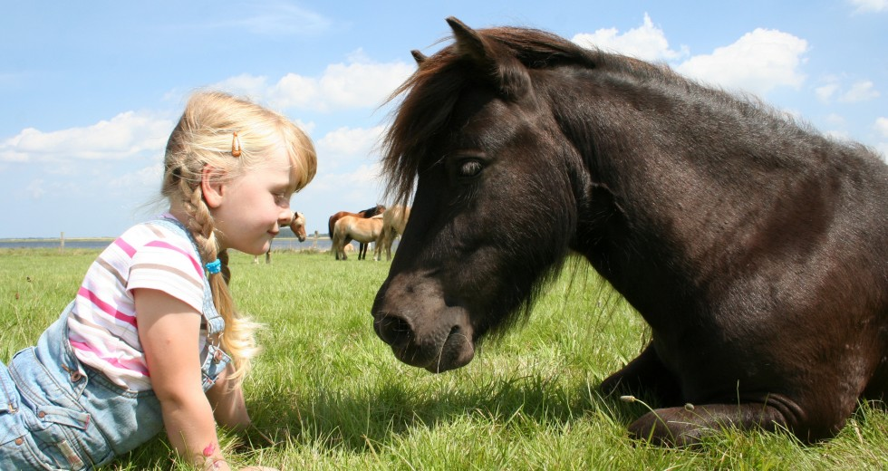 Erlebnis-Bauernhof Kliewe auf der Ostseeinsel Ummanz – das Familienparadies!