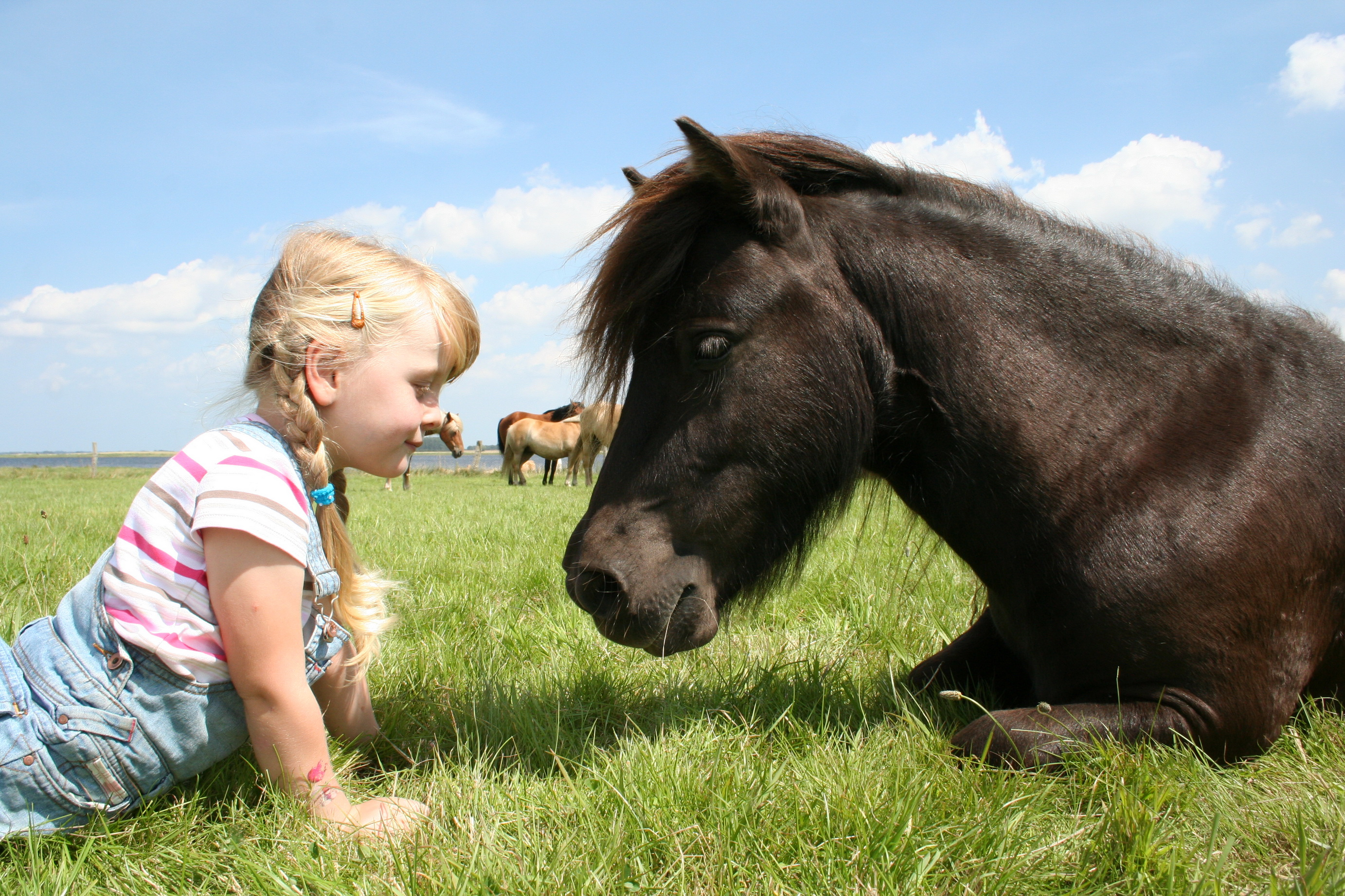 Ponys auf dem Erlebnis-Bauernhof Kliewe
