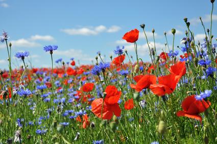 Den Duft des Blumenmeers im Farbenrausch genießen während der Bauernhofferien