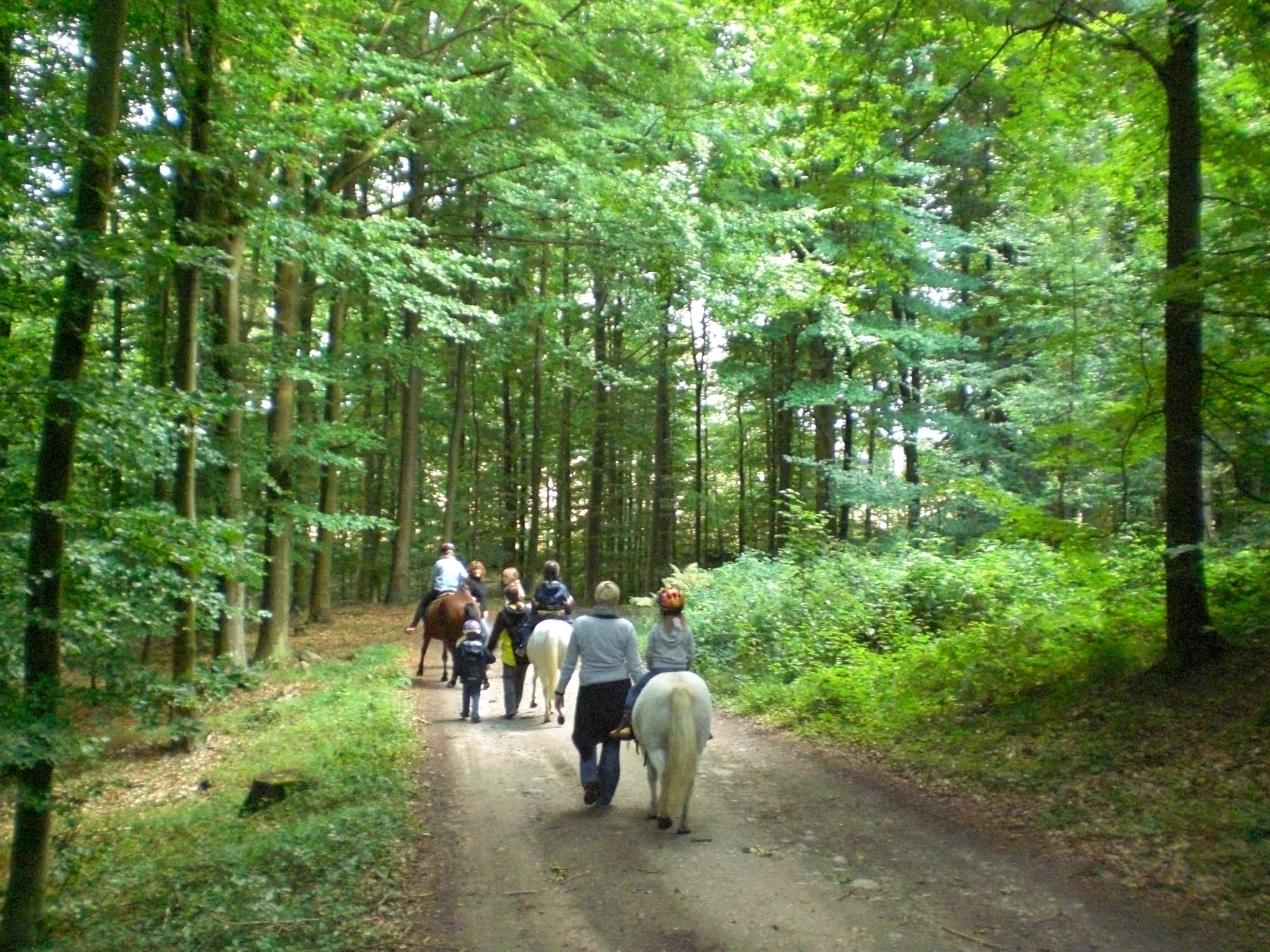 Reiten durch den Wald auf dem Ferienhof Schnoor