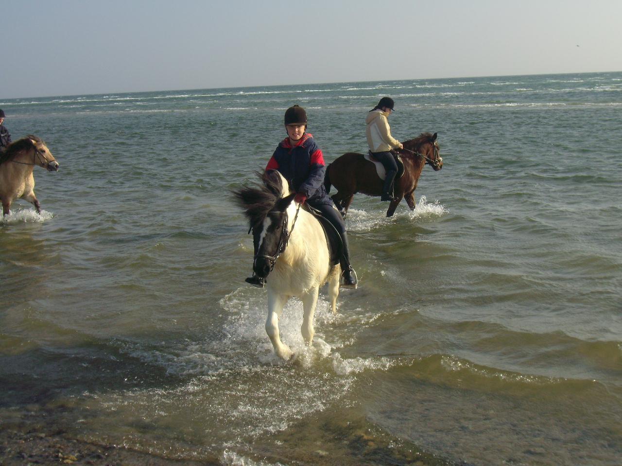 Reiten durch die Wellen auf dem Ferienhof Schnoor