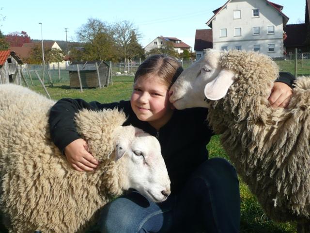 Schafe Ferienhof Rösch