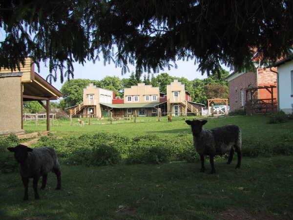 Schafe auf dem Schwalbenhof Meyer