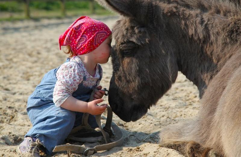 Selmas Ponyhof – Reiterparadies an der Nordseeküste