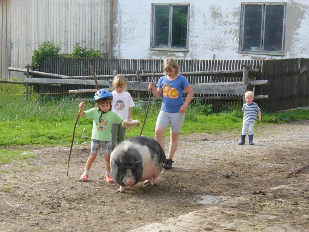 Spaziergang mit den Tieren, hier mit dem Schwein vom Kinderbauernhof Hindelang