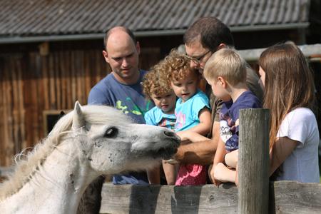 Streicheleinheiten für das Pony