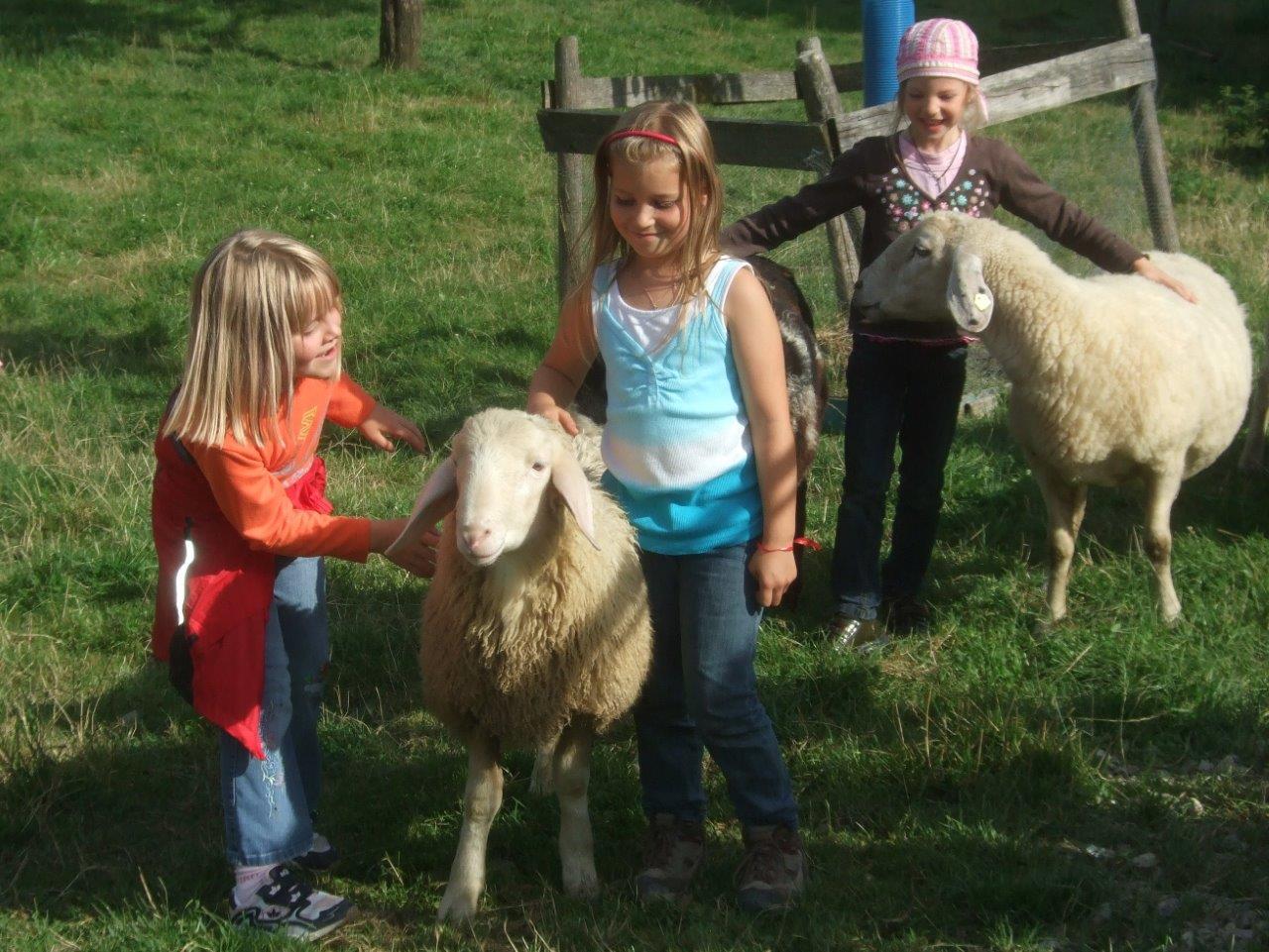 Streicheln der Schafe erlaubt auf dem Thomahof
