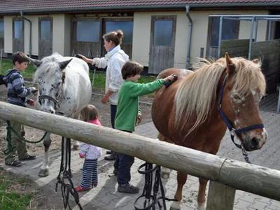 Striegeln der Pferde