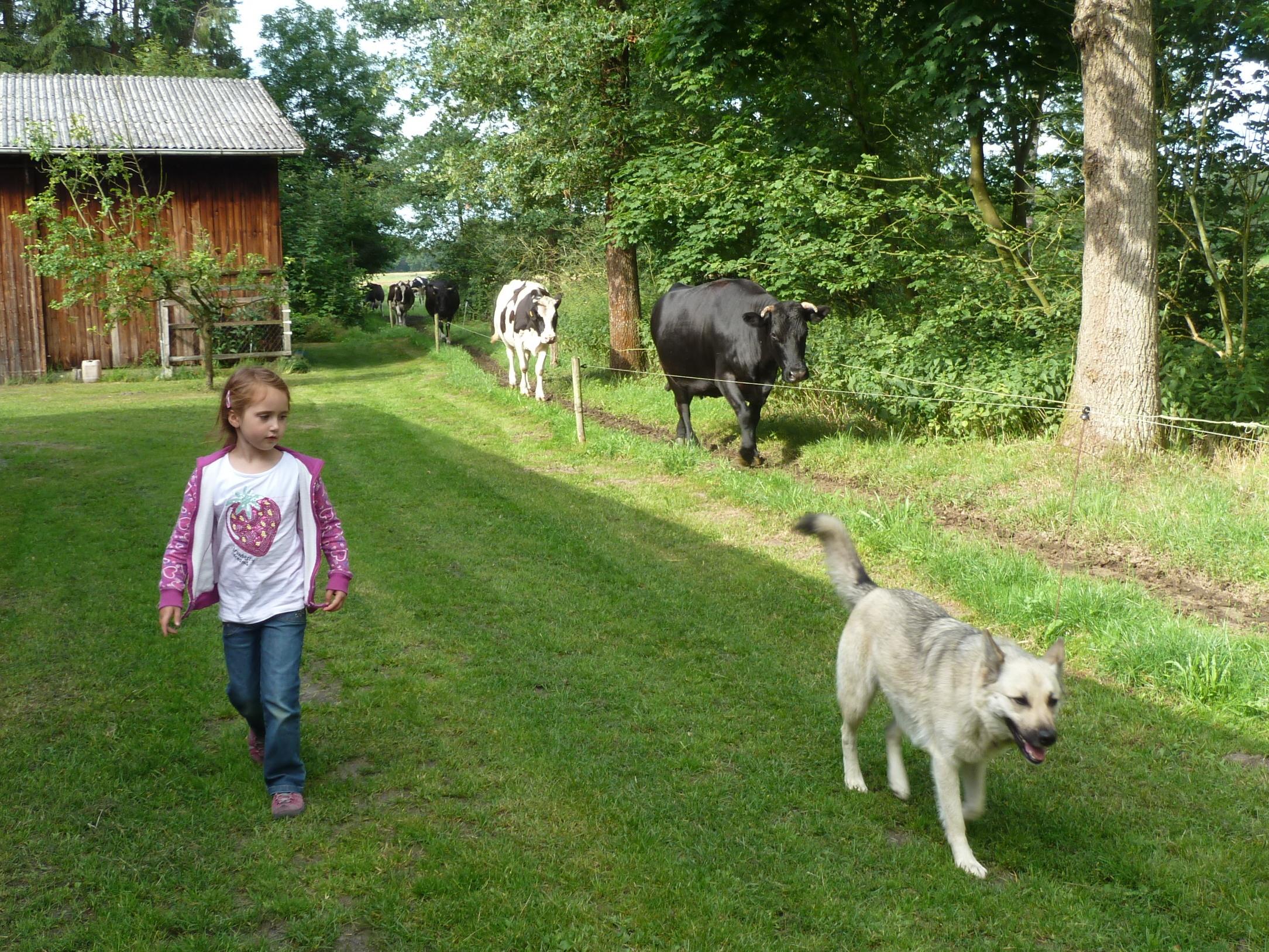 Die Kühe von der Weide holen auf Tödter´s Immenhof