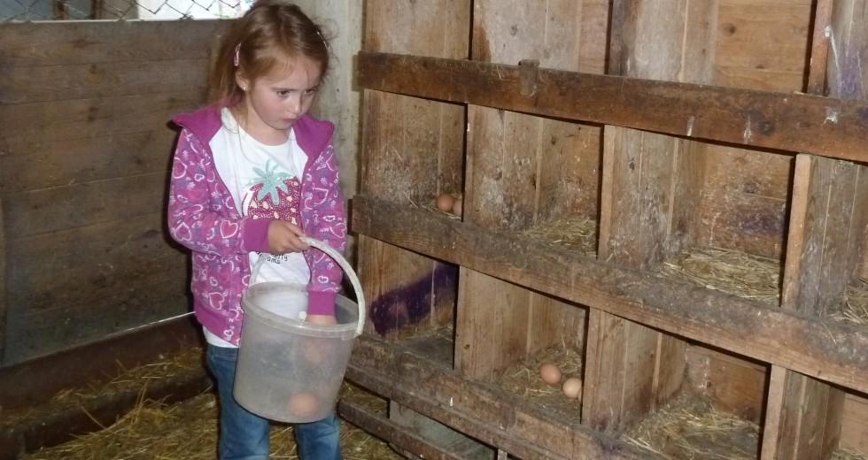 Aktiv sein und tierische Vielfalt genießen auf Tödter´s Immenhof