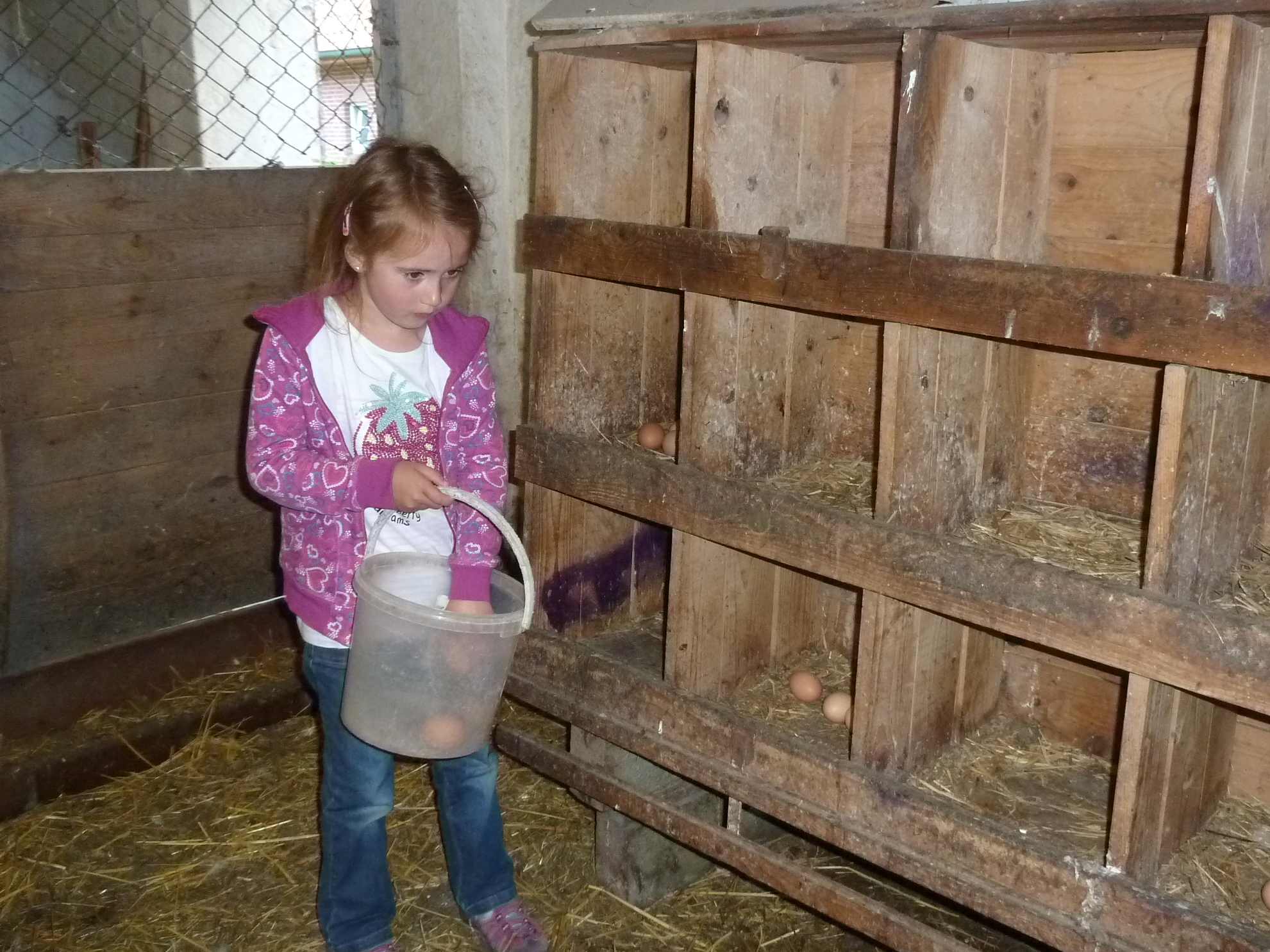 Eier für den Hofladen auf Tödter´s Immenhof