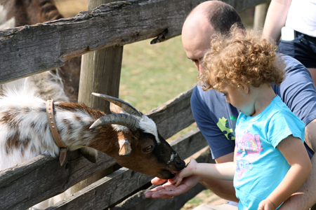 Tiere erleben - hier wie kitzelt eine Ziege