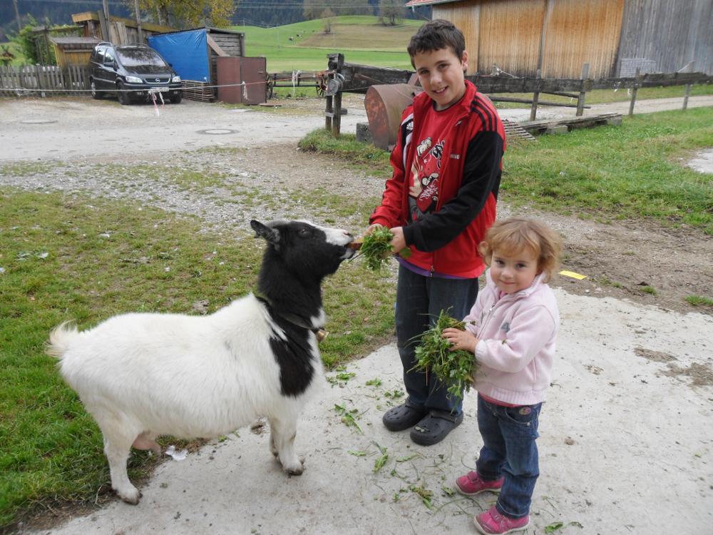 Tiere füttern wie hier die Ziege auf dem Kinderbauernhof Hindelang