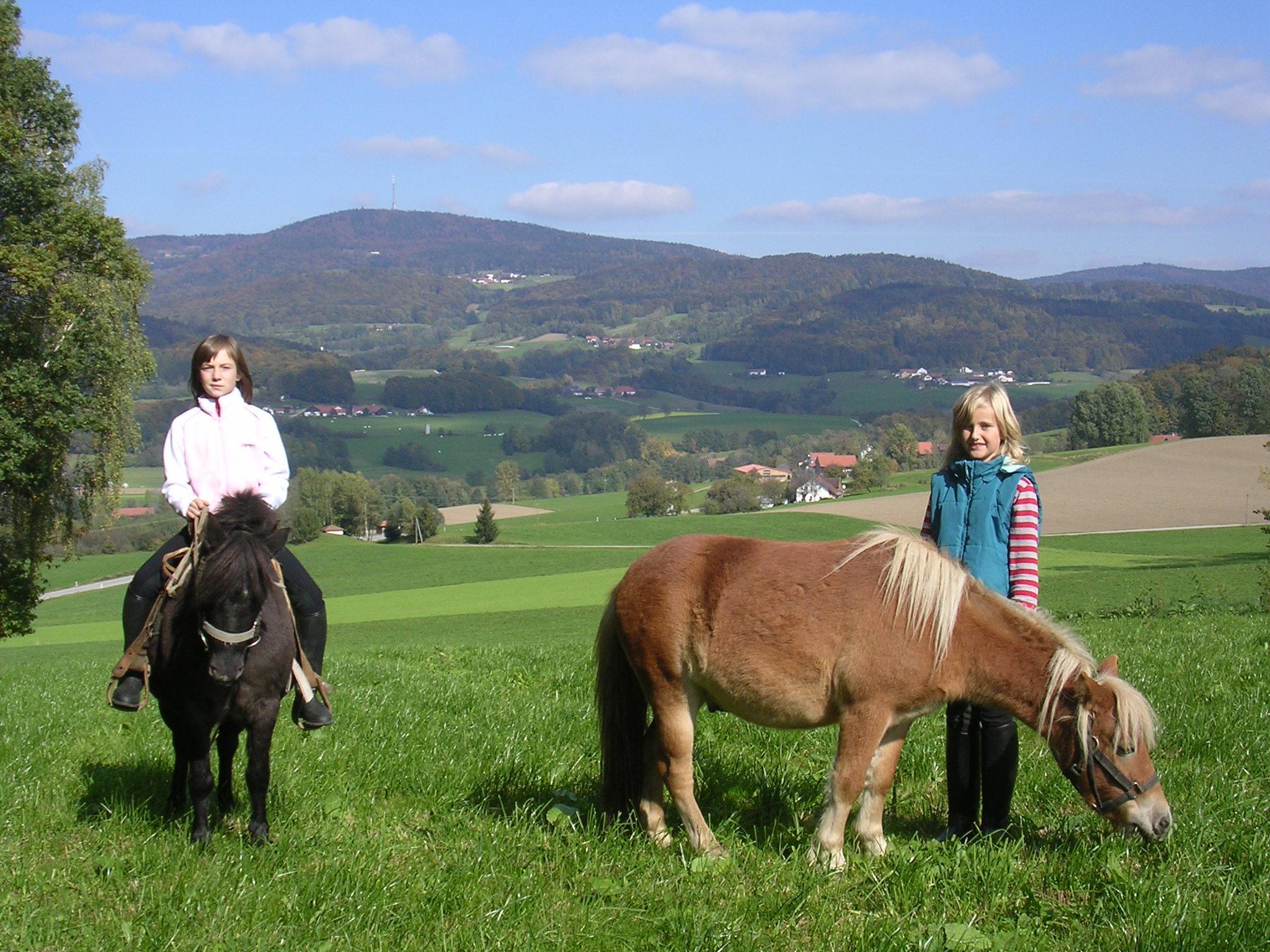 Tolle Aussicht auf dem Rücken der Pferde genießen auf dem  Ederhof