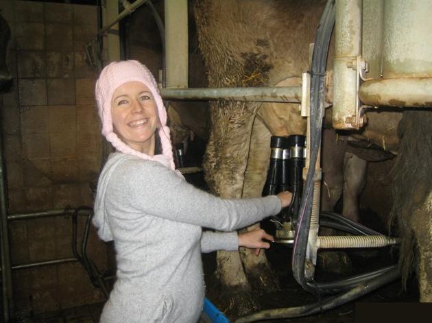 Viel Spaß beim Kühe melken