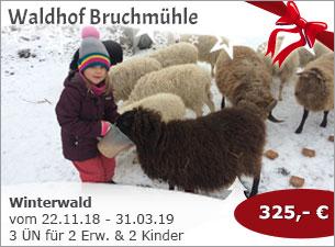 Waldhof Bruchmühle - Winterwald