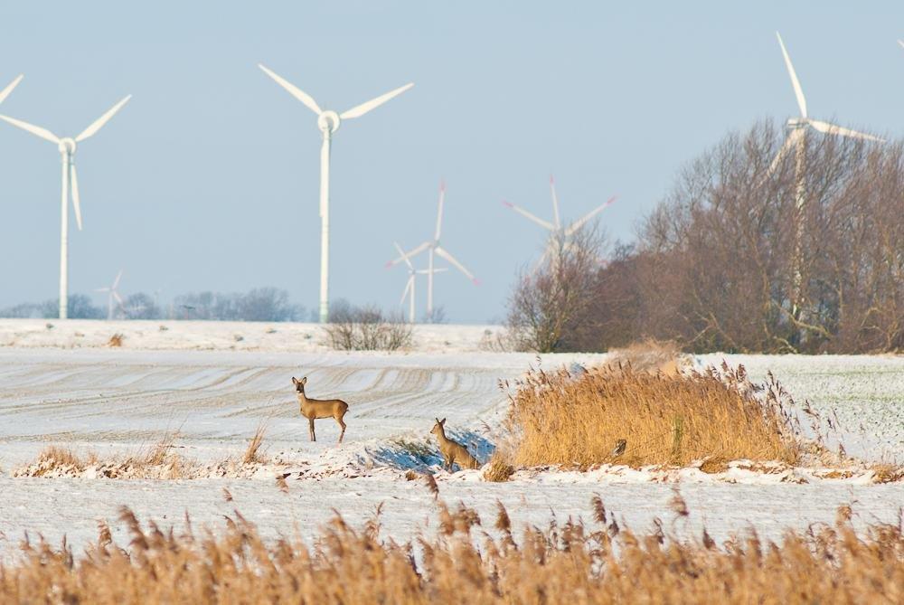 Windpark und Natur