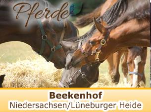 Beekenhof