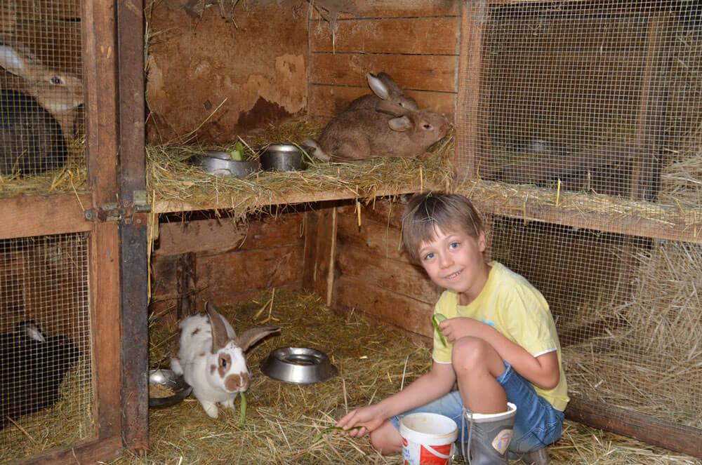 Hier darf mit den Hasen gekuschelt werden - © Schmidts Ferienhof
